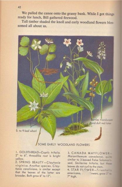Naturebook 004