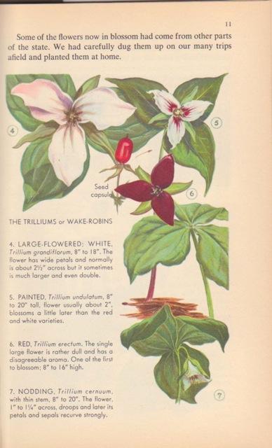 Naturebook 003
