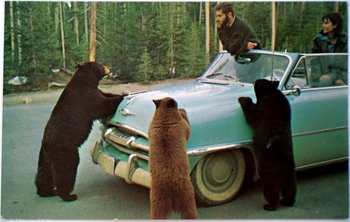 Bears,funny,photograph,postcard,cute,vintage,car-c1bbe8cd2895e934b802b20c51bd2583_h